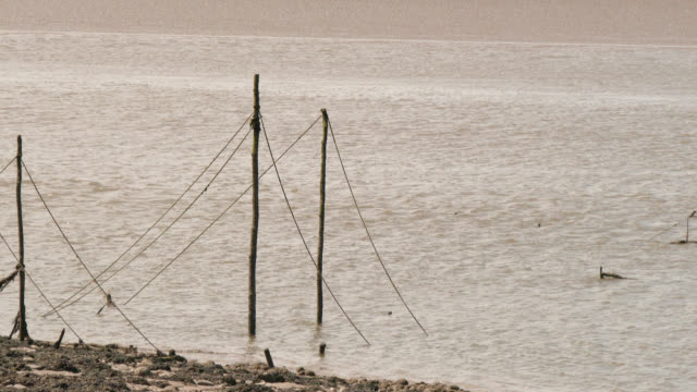 river estuary at low tide with old poles for fishing nets - low tide stock videos & royalty-free footage