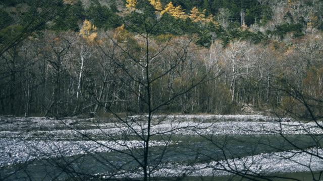 vídeos de stock, filmes e b-roll de rio que flui ao longo da floresta no outono - nagano