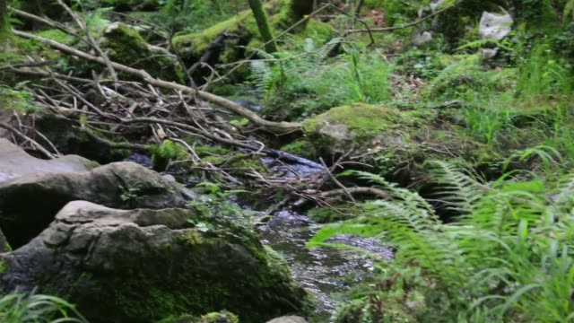 river flowing between rocks and plants. - parque natural stock videos and b-roll footage
