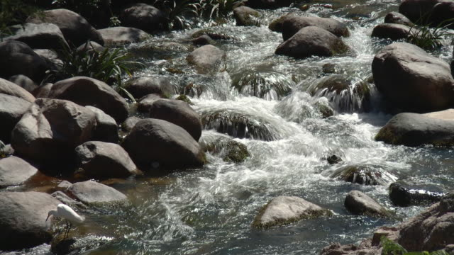 ms pan river flowing over rocks with white heron / yelapa, jalisco, mexico - wasservogel stock-videos und b-roll-filmmaterial