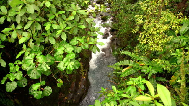 TD River flowing through a rainforest