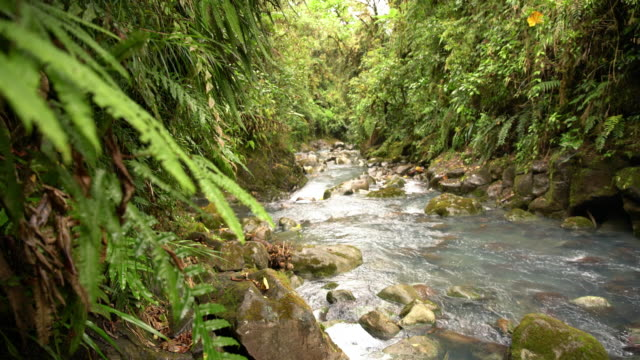 ds river flowing through a rainforest - flowing water stock videos & royalty-free footage
