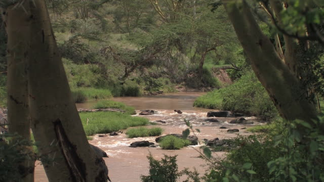 ms, river flowing through savanna, laikipia, kenya - stationary process plate stock videos & royalty-free footage