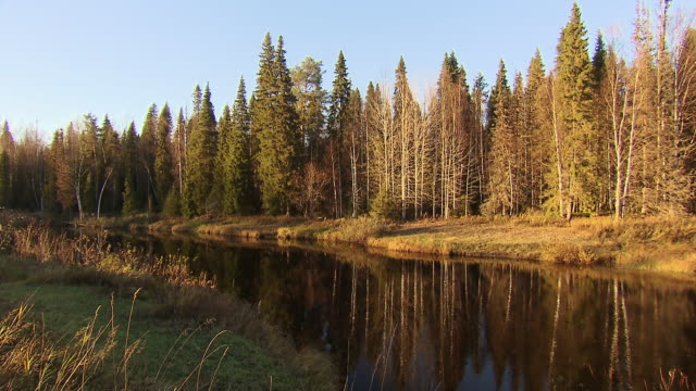 a river flows through a boreal forest in russia.  - boreal forest stock videos & royalty-free footage