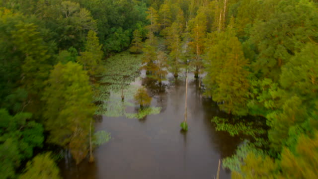 A river flows through a deciduous forest near Jackson, Mississippi.