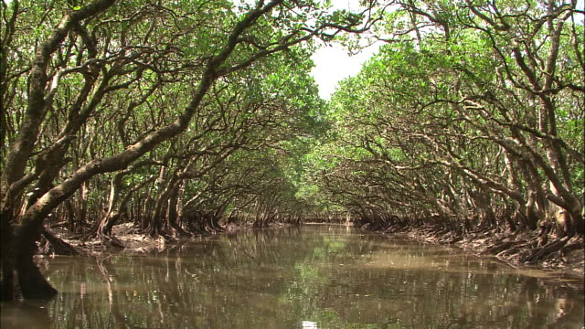 a river flows through a mangrove forest. - mangrove forest stock videos & royalty-free footage