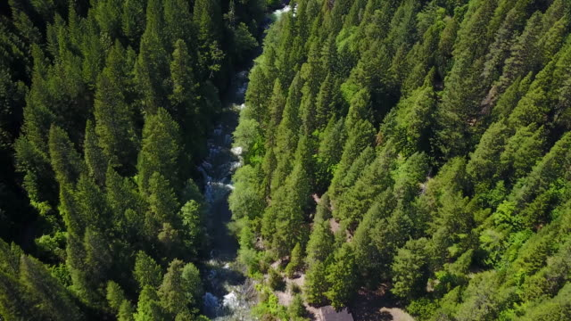 River flows through California forest, aerial