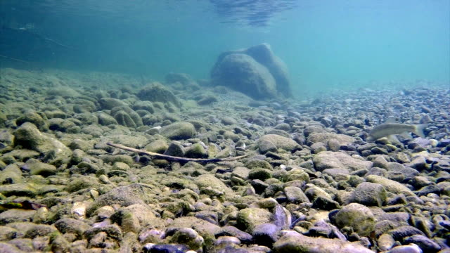 river iška slovenia - trout stock videos and b-roll footage