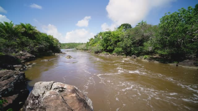 river in bahia, brazil - sunny stock videos & royalty-free footage