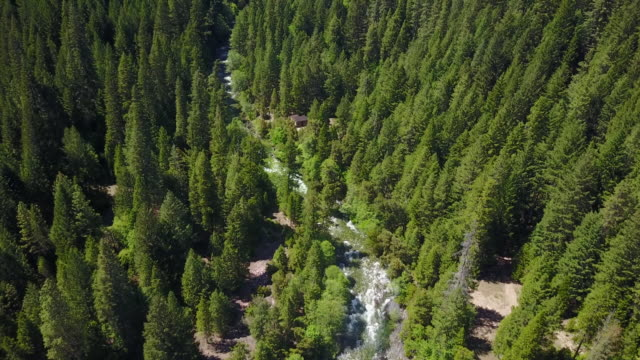vídeos de stock, filmes e b-roll de river in california forest, aerial - oeste dos estados unidos