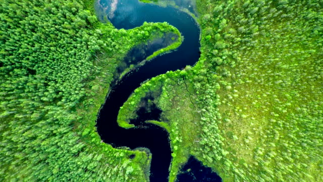 AERIAL: River in Forest