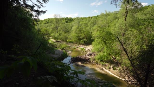 stockvideo's en b-roll-footage met rivier in rouge national urban park, canada - stroomversnelling