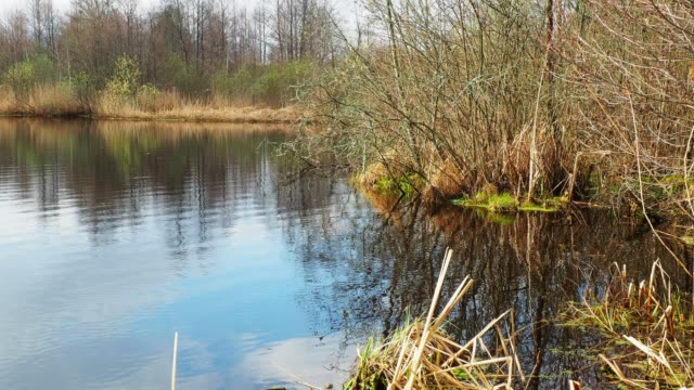 Fluss im Frühling
