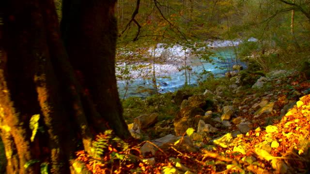 SLO MO Rio na floresta