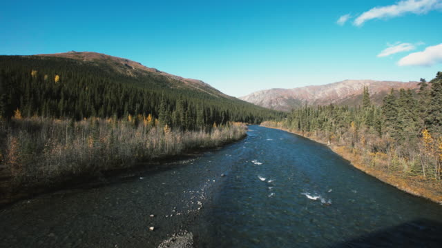 river in the forest - denali national park stock videos & royalty-free footage