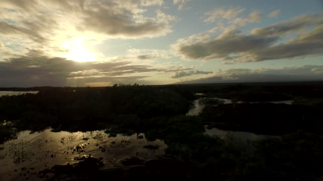 river in the galapagos - galapagos islands stock videos & royalty-free footage