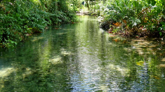 river in the jungles of jamaica - jamaica stock videos and b-roll footage