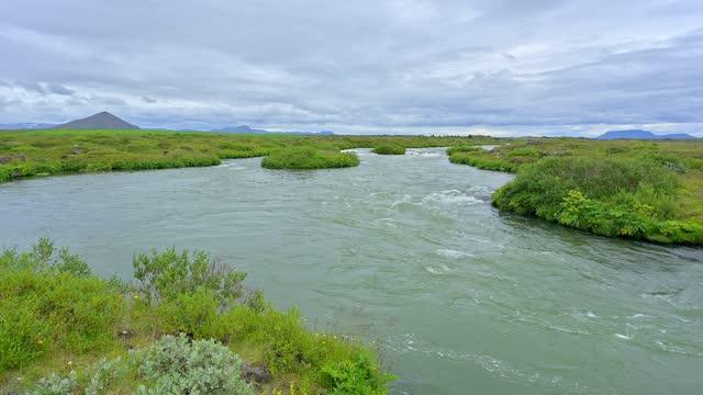 river laxa in summer, skutustadir, myvatn region, nordurland vestra, northern region, iceland - invertebrate stock videos & royalty-free footage