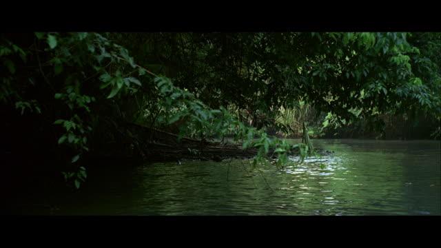 vídeos y material grabado en eventos de stock de ds river lined with tropical vegetation, branches leaning toward green water - cámara en mano