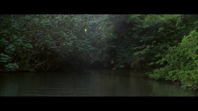 vídeos y material grabado en eventos de stock de ds river lined with tropical vegetation, branches leaning toward green water and filtering sunlight onto the water's surface - cámara en mano