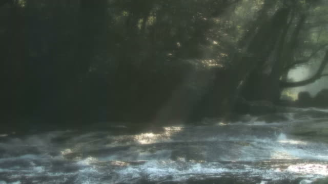 river lit by sunshine through trees - 福岡県点の映像素材/bロール