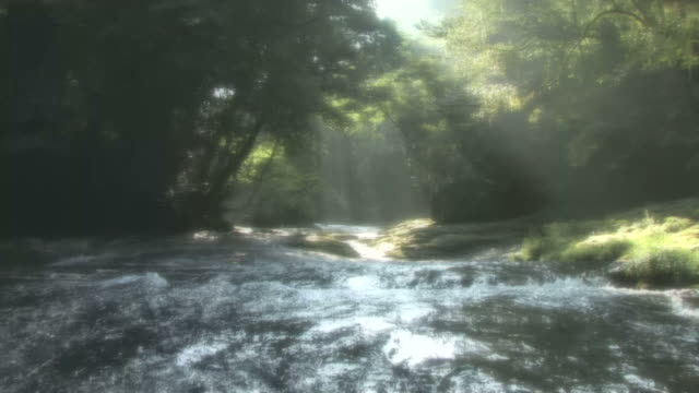 vídeos de stock, filmes e b-roll de river lit by sunshine through trees - prefeitura de fukuoka