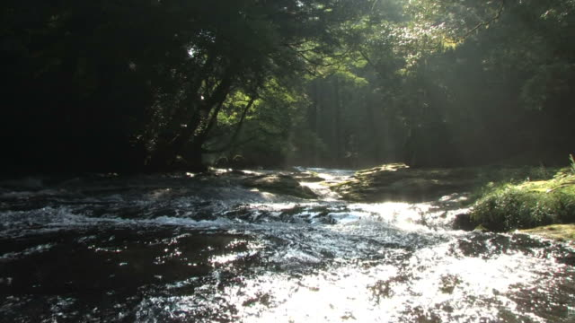river lit by sunshine through trees - 川点の映像素材/bロール