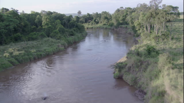 a river meanders past lush forests in masai mara, kenya. available in hd. - river stock videos & royalty-free footage