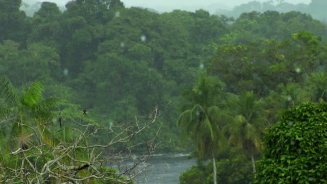 ms river negro and woods during tropical summer rainy day / sao gabriel da cachoeira, amazonas, brazil - cachoeira stock videos and b-roll footage