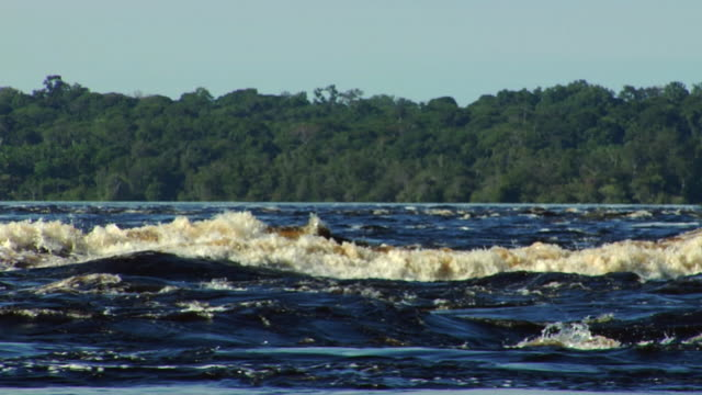 ms pan river negro rapids / sao gabriel da cachoeira, amazonas, brazil - cachoeira stock videos and b-roll footage