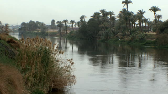 vídeos y material grabado en eventos de stock de ws river nile and palm trees, fayoum, egypt - toma ancha