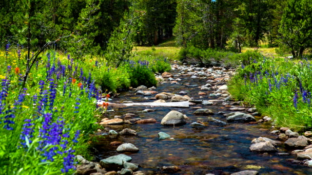river on bright green meadow - yosemite national park stock videos and b-roll footage