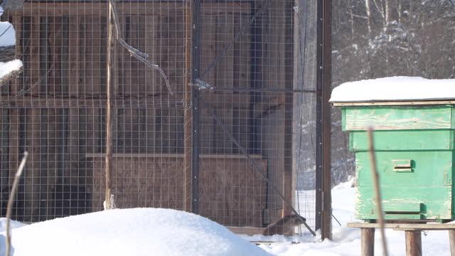 flodutter (lutra lutra) visslande högt, vitryssland - akvatisk organism bildbanksvideor och videomaterial från bakom kulisserna