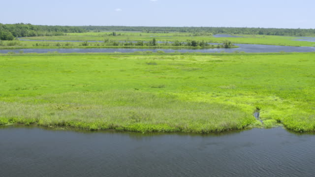 WS ZI TU AERIAL POV River passing in middle of Francis Marion National Forest / Berkeley County, South Carolina, United States
