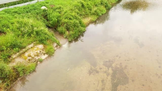 vidéos et rushes de pollution des rivières - imperfection