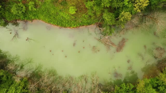 river pollution - freshwater stock videos & royalty-free footage