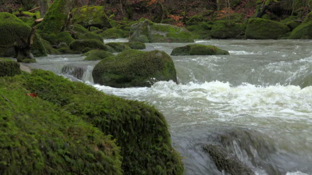 river pruem near irrel, nature park south eifel, eifel, rhineland-palatinate, germany - moss stock videos & royalty-free footage