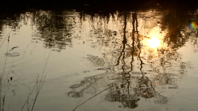 river reflection - next to stock videos & royalty-free footage