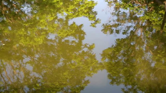 River Reflection yellow tree : HD VDO