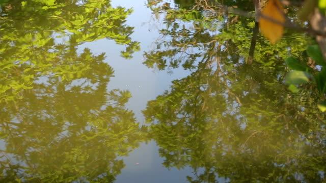 floden speglar gula träd: hd vdo - uppdämt vatten bildbanksvideor och videomaterial från bakom kulisserna