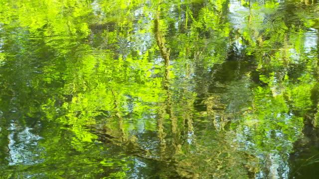 vídeos de stock, filmes e b-roll de river reflections - olympic national park