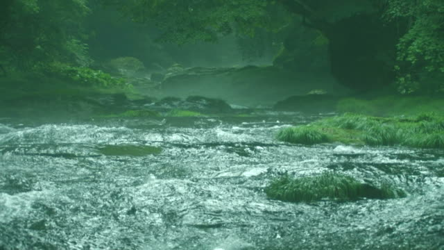 vídeos de stock, filmes e b-roll de cu river running through forest - prefeitura de fukuoka