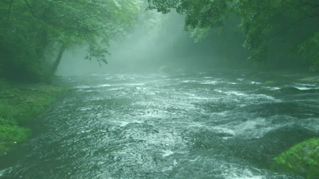 river running through forest - 福岡県点の映像素材/bロール