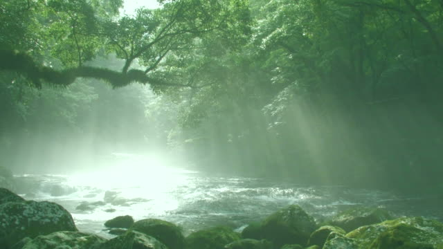 vídeos de stock, filmes e b-roll de river running through forest - prefeitura de fukuoka