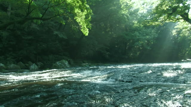 river running through forest - fukuoka prefecture stock videos & royalty-free footage