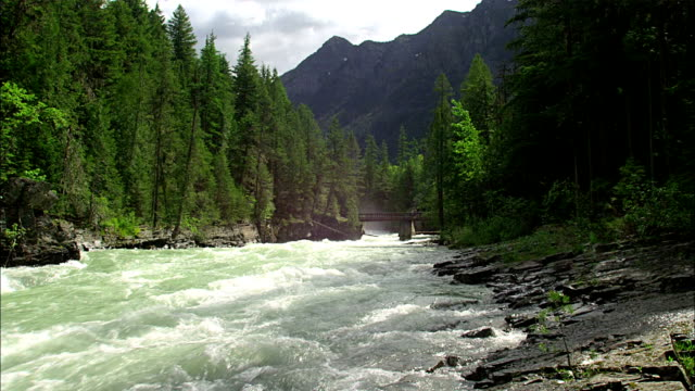 a river rushes through an evergreen forest. - rapids river stock videos & royalty-free footage