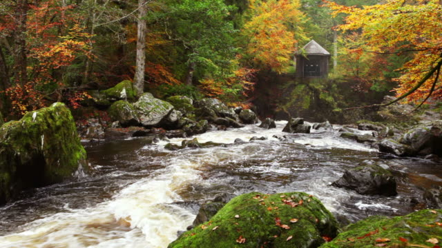 River through autumn colours at the Hermitage, Scotland