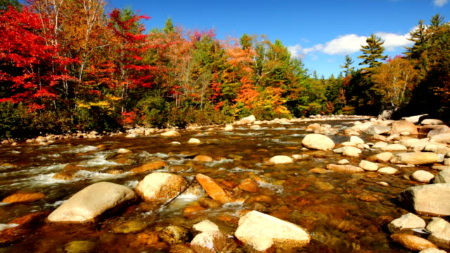 river through fall foliage, swift river, new hampshire, usa - new england usa stock videos & royalty-free footage
