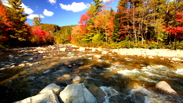 river through fall foliage, swift river, new hampshire, usa - maple tree stock videos and b-roll footage