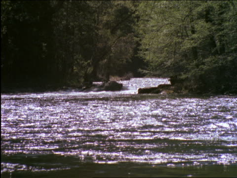 vídeos de stock, filmes e b-roll de river thru forest / yosemite national park, california - 2001
